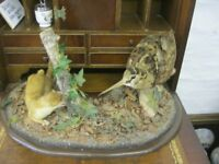 VINTAGE TAXIDERMY 'STOAT & WOODCOCK' ON KIDNEY BASE. GREAT CONDITION. VIEWING/DELIVERY AVAILABLE