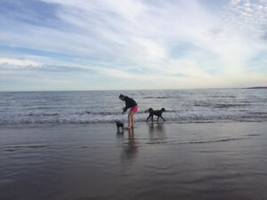 Experienced, Reliable and Loving Pet Sitter