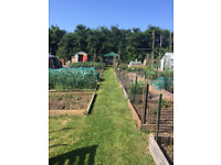 Allotments For Rent (Rent free for 3 months!)