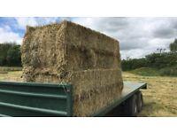 Medow hay