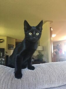 Kitten looking for a good home!