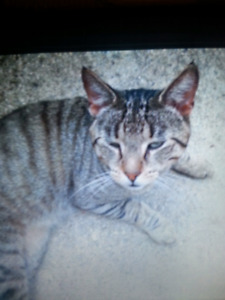 Missing from Graham Street Area  Reward Offered