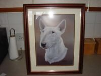an english bull terrier picture