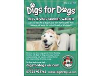 DOG LOVING FAMILIES WANTED. PET SITTING, DOG BOARDING, DOG WALKING WORSLEY MANCHESTER SALFORD
