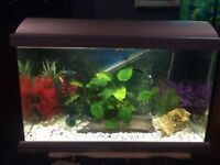 2ft Fish Tank with Fish