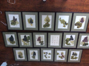 Collection of lithograph grape prints