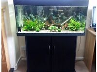 Juwel Rio 180 Litre Fish Tank (Includes Everything Complete set up)