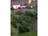 Mature Shrubs free to anybody who wants to dig up and take away