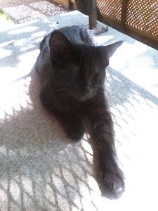 Female Kitten In Need Of A Good Home