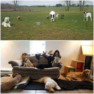 Choose the right Daycare Environment for your Dog!Balancedk9Livi