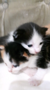 Kittens are waiting for you!!! 5 of the lovelies...