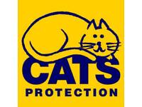 Cat Fosterers Wanted