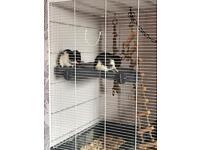 4 female rats