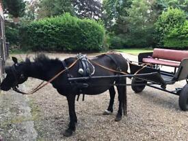 Sec C driving mare