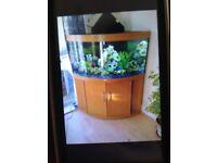 Juwel Fish Tank 350l corner