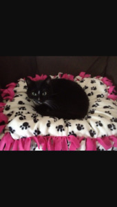 Pet beds/ blankets for sale