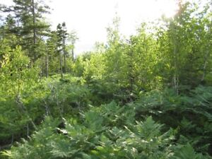 100 acres of good deer hunting country