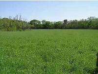 Grazing land to rent