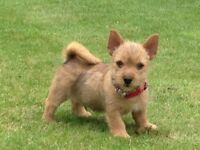 'BISCUITS' DOG GROOMING STUDIO - WOODHALL SPA, LINCS (City & Guilds qualified Groomer)