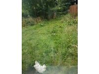 NEED GRASS DOING AND RUBBISH COLLECTING BD6