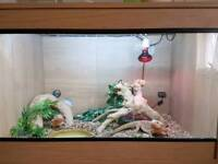 Bearded dragons & snakes with each with viv