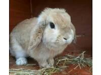 Rabbit hutch with 2 rabbits