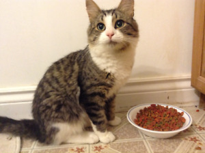 Full Grown Male Cat For Rehoming.