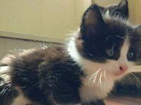 Six beautiful kittens to sell!