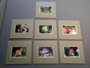 Garden Pics with Matting
