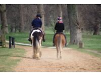 Riding Instructor/ Stable Hand