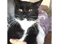 MISSING BLACK AND WHITE CAT IN TURNPIKE LANE - TIRMIK
