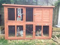 3 rabbits and rabbit cage £80 ONO
