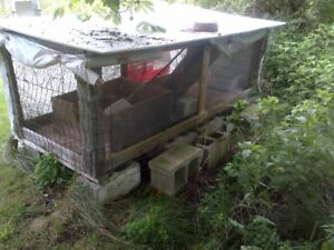 free rabbit hutches and water bottles