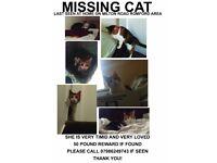 MISSING CAT- MILTON ROAD, ROMFORD!