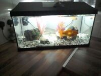 Free goldfish (needs a big tank to live in )