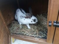Rabbit and its Hutch