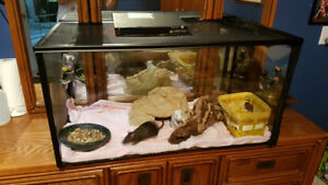 Pet rats and enclosure