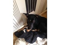 Lovely dog to rehome