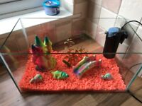 Rectangle fish tank