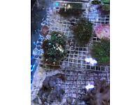 Corals Marine Tank