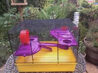 Large gerbil cage collect Sprowston