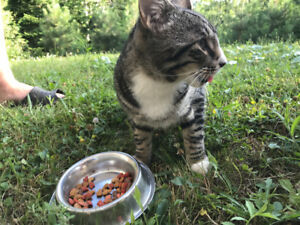 Young Male Cat - Quispamsis