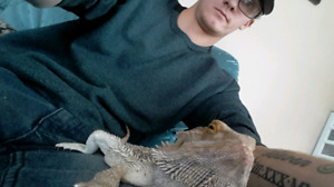 2 bearded dragons, male and female