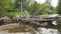 Log Jam Removal