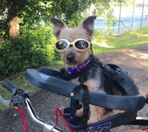 The Buddyrider: bicycle seat for dogs