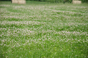 ^^^^^  CROP OF CLOVER FOR SALE -- 85 ACRES    ^^^^^^^^^^^