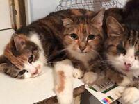£ cats left after bearevement.
