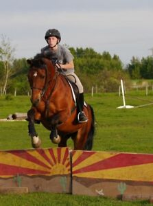 Beautiful Sport horses for sale, quiet and athletic