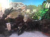 9 Tropical fish cheap!!!