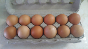 Farm Fresh Eggs Non GMO